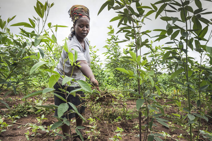 Integrating the efforts of Climate change adaptation with nutrition and food systems is the way forward to achieve food security and nutrition goals: UN Report