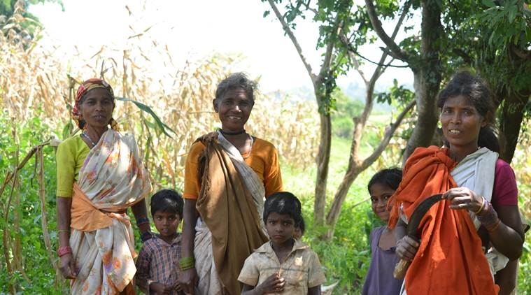 Thousands of women in Dindori have taken up the task of reviving the cultivation of nutrient-rich kodo and kutki, thereby marking a noticeable shift from subsistence production to commercial agriculture in this tribal belt home to indigenous groups like Baiga and Gond. (Express Photo by Sajin Saju)