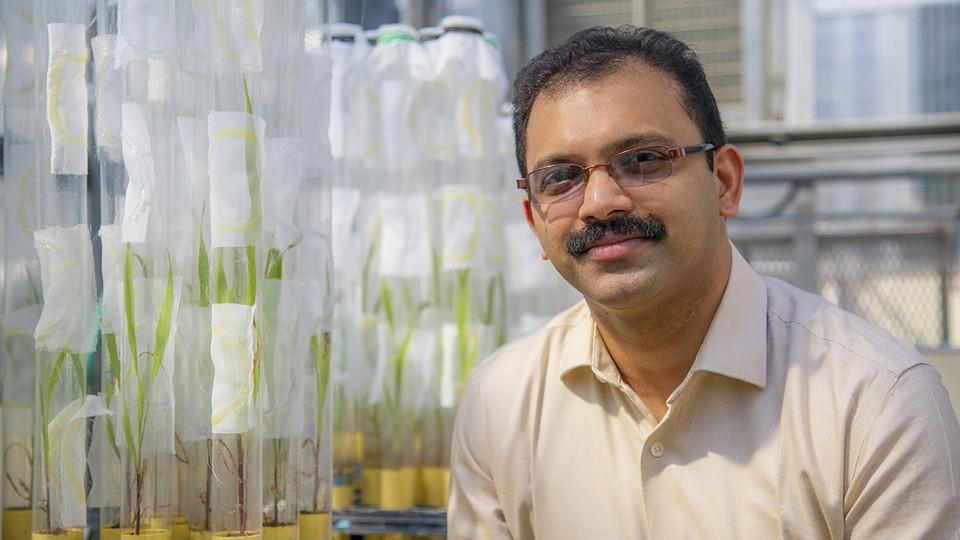Study of sorghum-munching aphids earns NSF award