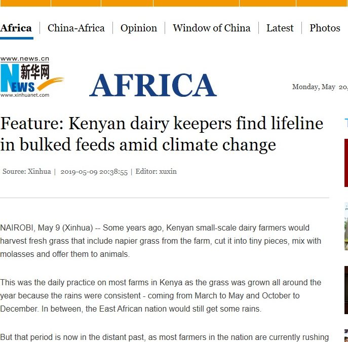 Kenyan dairy keepers find lifeline in bulked feeds amid climate change