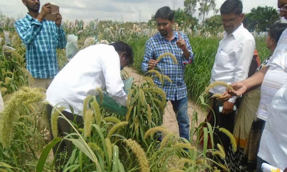 Boosting organic farming the Khadyam way