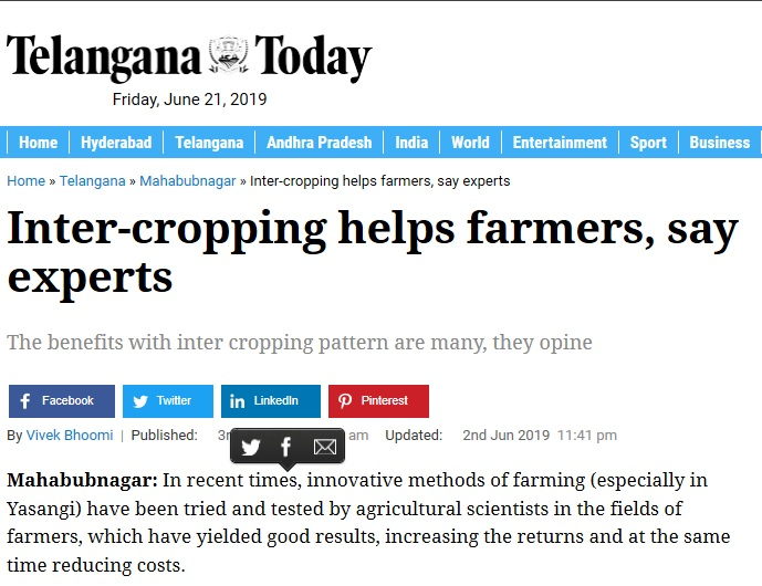 Inter-cropping helps farmers, say experts