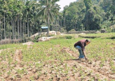 Tribals in Chinnar on a mission to return to farming roots