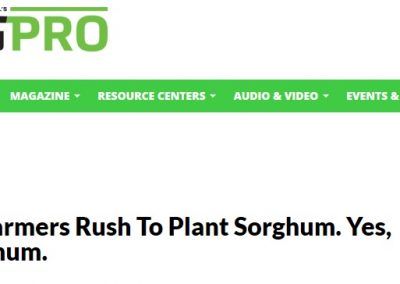 MI Farmers Rush To Plant Sorghum. Yes, Sorghum.