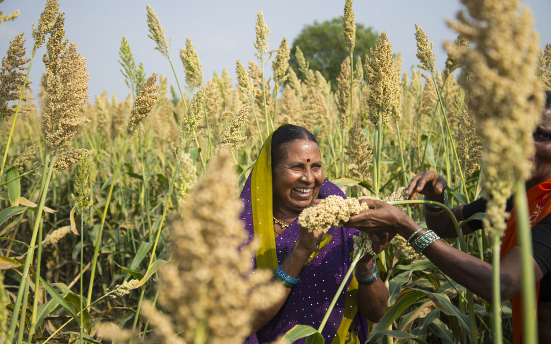 FAO Calls For Boosting Millets To Fight Malnutrition