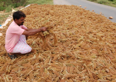 Farming Smart Foods