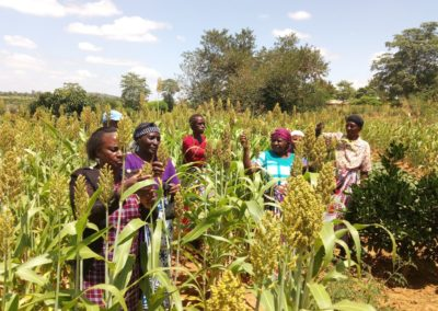 Sorghum and millet value chain project enhances uptake of improved research technologies and products in Kenya