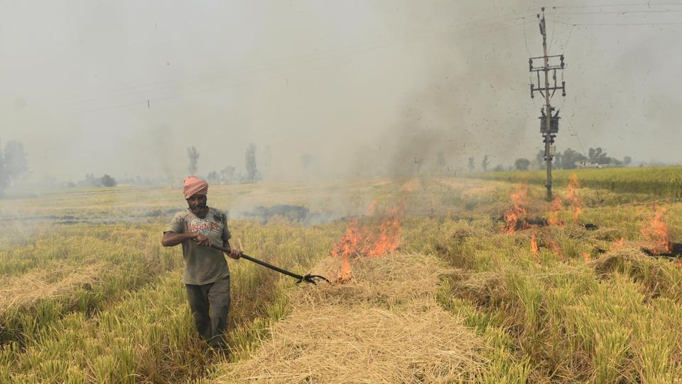 Millets can be a Solution to Delhi's pollution crisis