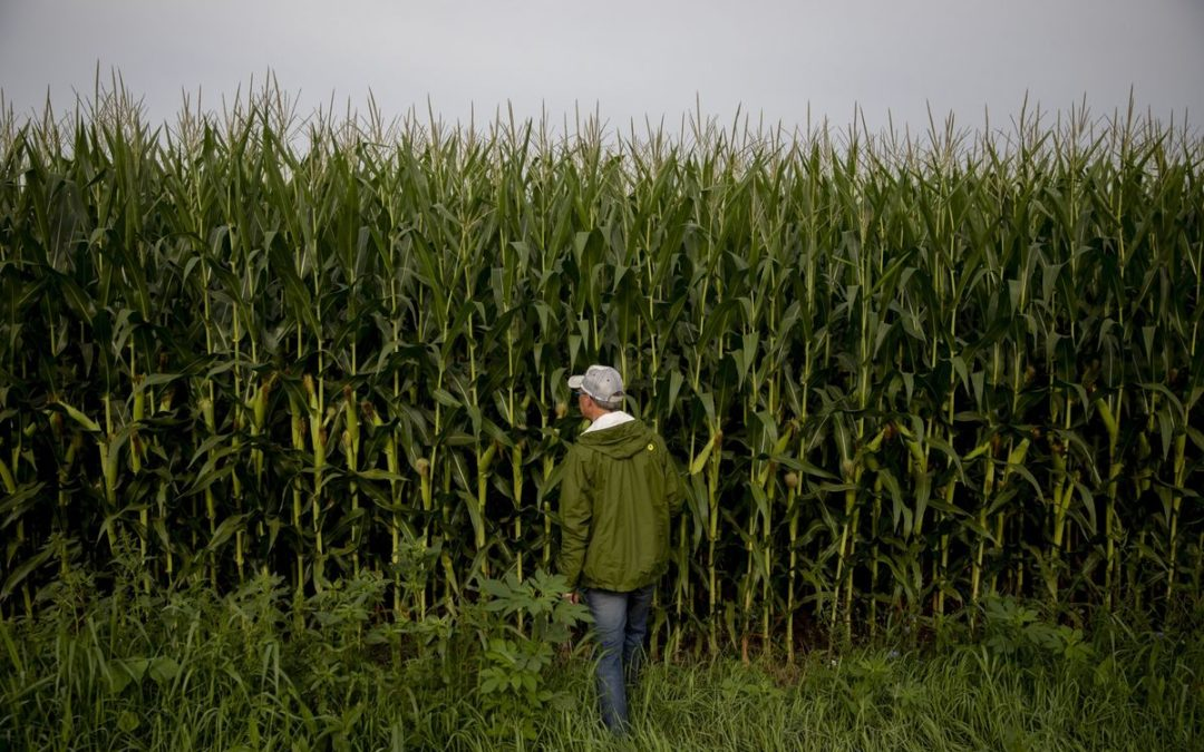 Making Seeds to Withstand Climate Change Is Getting Harder Read more