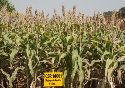 Traditional crops puff hopes for climate resilience in Kenya