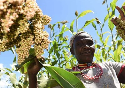 How sorghum is giving Kerio Valley peace, prosperity