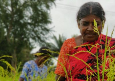 Kerala's attempt to revive traditional farm practices puts tribal women at the forefront