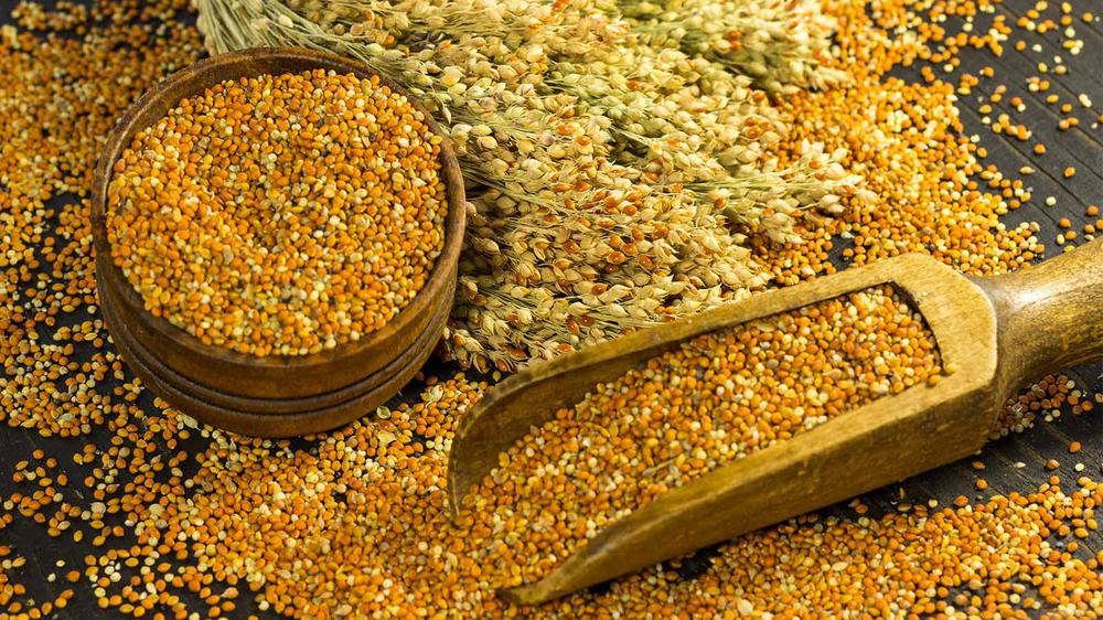 Why We Believe Millets are the Food of the Future