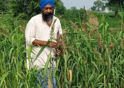Amid pandemic, farmers growing millets to boost immunity