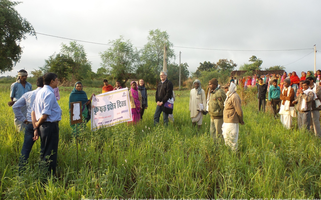 Promoting kodo and kutki millets for improved incomes, climate resilience and nutrition in Madhya Pradesh, India