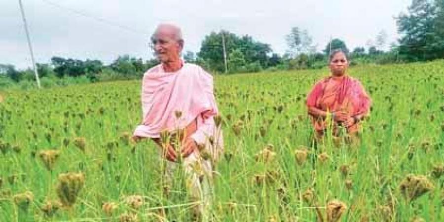 Millet outlets in 5 Bargarh blocks by November
