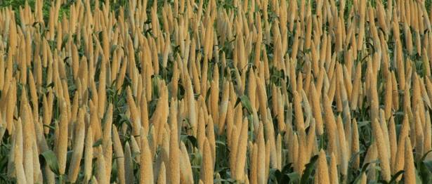 Aayog to States: Replicate Odisha Millet Mission