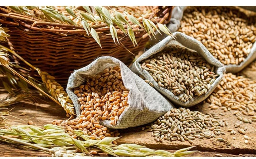 Madhya Pradesh: Government forms high-powered panel to boost coarse cereal area