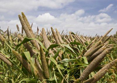 Ensuring food security, nutrition