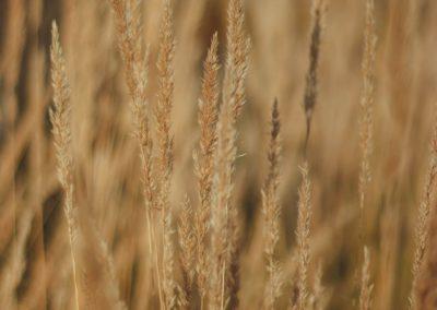 ICAR-IIMR, ICRISAT launch Millet Finder database
