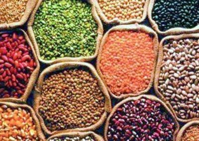 Centre needs to implement diversified food basket schemes, says study